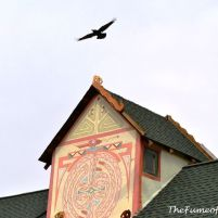 Ravens love this area