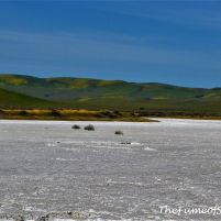 Soda Lake - Dena Burroughs photo